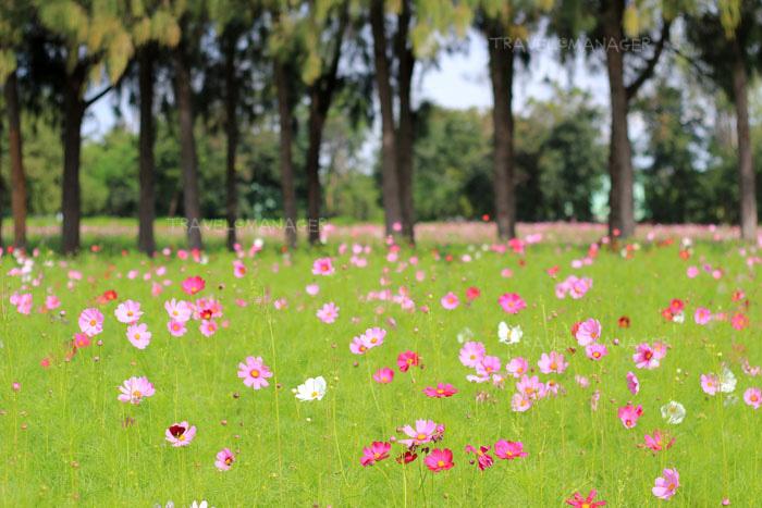 ชมความงามของดอกไม้ในสวนเมืองไทย ปี 2019