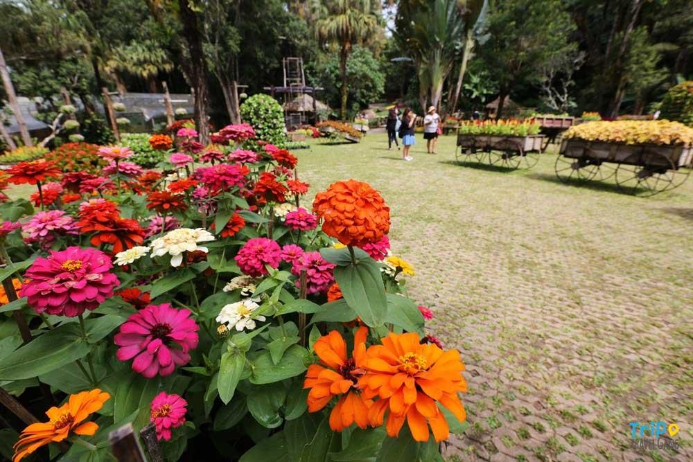 ชวนชื่นชมความงามของดอกไม้ในสวนเมืองไทย ปี 2019
