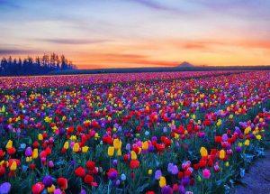 ชวนชื่นชมความงามของดอกไม้ในสวน